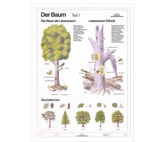 DUO Der Baum Teil I / Lernkarte