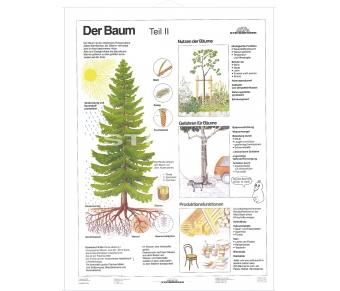 DUO Der Baum Teil II / Lernkarte