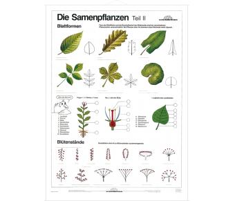 DUO Samenpflanzen Teil II / Lernkarte