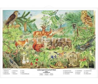DUO Lebensgemeinschaft Wald / Lernkarte