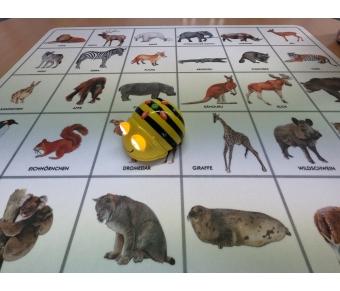 Bee Bot-Matte Welche Tiere kennst du?