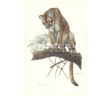 Natur Kunstdruck klein Puma