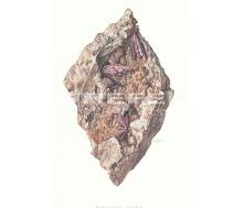 Natur Kunstdruck klein Kobaltblüte