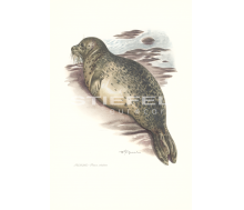 Natur Kunstdruck klein Seehund