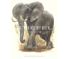 Natur Kunstdruck klein Afrikanischer Elefant