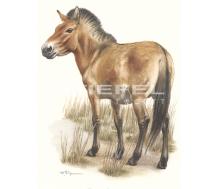 Natur Kunstdruck klein Wildpferd