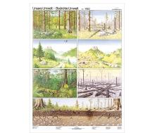 Bedrohte Umwelt Wald / Land