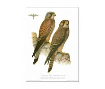 Kunstdruck I Paketpreis Serie 1 Greifvögel