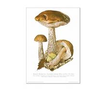 Natur Kunstdruck Birken Röhrling