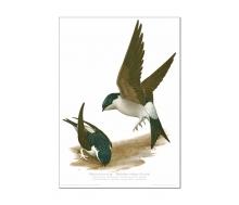 Natur Kunstdruck Mehlschwalbe