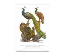 Natur Kunstdruck Pfau/Bronzeputter