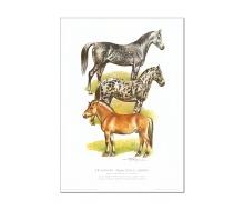 Natur Kunstdruck Pferd