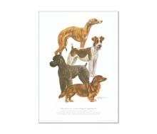 Natur Kunstdruck Hund