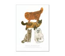 Natur Kunstdruck Katze