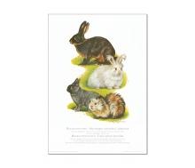 Natur Kunstdruck Kaninchen/Meerschweinchen