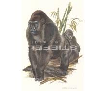 Natur Kunstdruck klein Gorilla