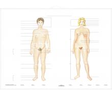 DUO Unser Körper / Lernkarte