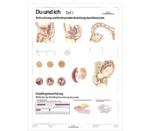 DUO Du und Ich - Sexualkunde / Lernkarte