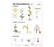 DUO Samenpflanzen Teil I / Lernkarte