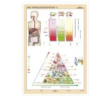 DUO Verdauungssystem Teil II / Lernkarte