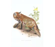 Natur Kunstdruck klein Rotfuchs