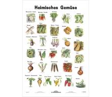 Heimisches Gemüse - Lernposter Kleinformat
