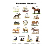 Heimische Haustiere - Lernposter Kleinformat