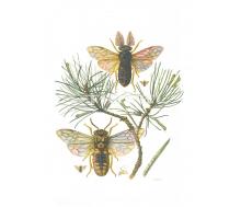 Natur Kunstdruck klein Blattwespe