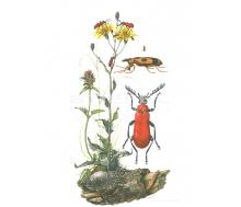 Natur Kunstdruck klein Kräuterdieb