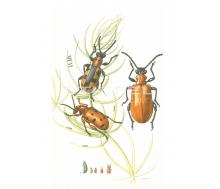 Natur Kunstdruck klein Spargelhähnchen