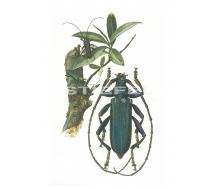 Natur Kunstdruck klein Moschusbock
