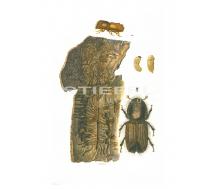 Natur Kunstdruck klein Buchdrucker