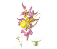 Natur Kunstdruck klein Schnecken Kranker