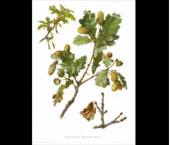 Kunstdruck I Paketpreis Serie 2 Bäume I