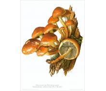 Natur Kunstdruck Ziegelroter Schwefelkopf