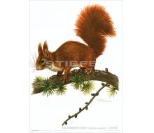 Natur Kunstdruck Eichhörnchen