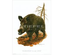Natur Kunstdruck Wildschwein