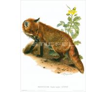 Natur Kunstdruck Rotfuchs