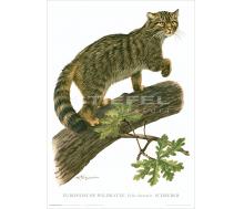 Natur Kunstdruck Europäische Wildkatze