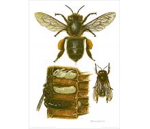 Natur Kunstdruck Honigbiene