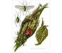 Natur Kunstdruck Blattlaus
