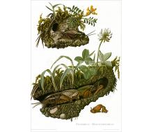 Natur Kunstdruck Feldgrille