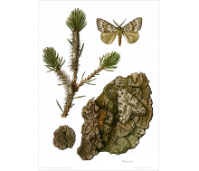 Natur Kunstdruck Nonne