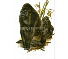 Natur Kunstdruck Gorilla