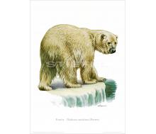 Natur Kunstdruck Eisbär