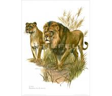 Natur Kunstdruck Löwe