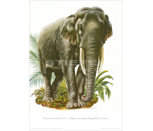 Natur Kunstdruck Indischer Elefant