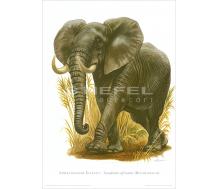 Natur Kunstdruck Afrikanischer Elefant
