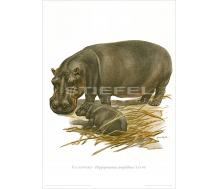 Natur Kunstdruck Flusspferd