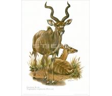 Natur Kunstdruck Großer Kudu